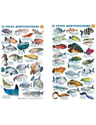 """lámina sumergible """"peces mediterráneos"""""""